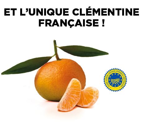 Clémentine avec logo IGP