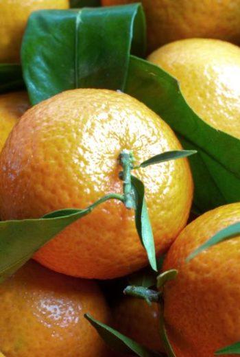 Salade de clémentines de Corse à l'huile d'olive et à la menthe de Saveur Passion